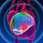 Investigaciones científicas revelan que el corazón humano posee una 'mente' cuántica