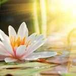 Para leer Savitri: El Libro del Yoga