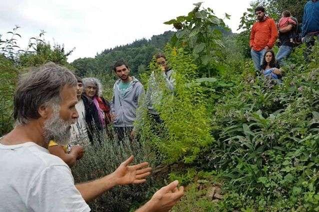 Bosques de alimentos: una solución al problema del hambre
