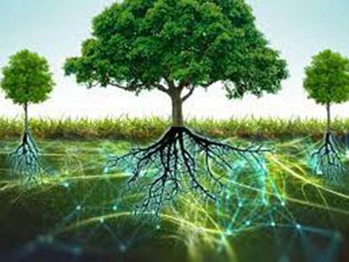 Los árboles se comunican y ayudan entre sí por una red oculta bajo la tierra